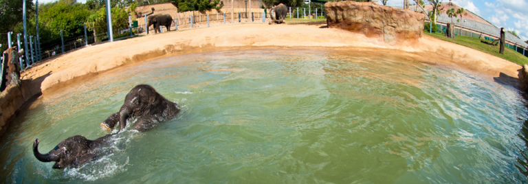 Houston Zoo Gets Endless Hot Water with Eternal